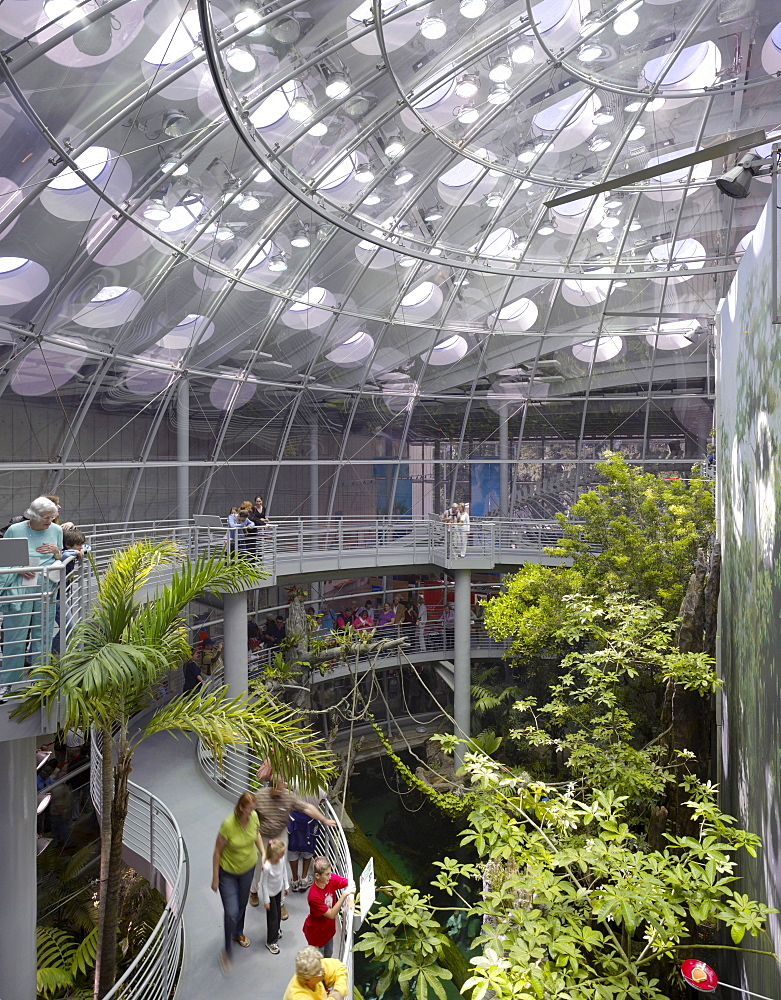 Interior conservatory space, California Academy of Sciences, architect Renzo Piano Building Workshop, San Francisco, California, United States of America, North America
