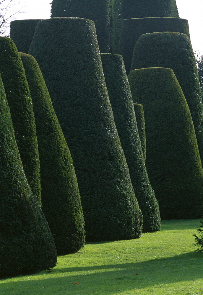 Topiary garden in winter, Packwood House, Warwickshire, England, United Kingdom, Europe
