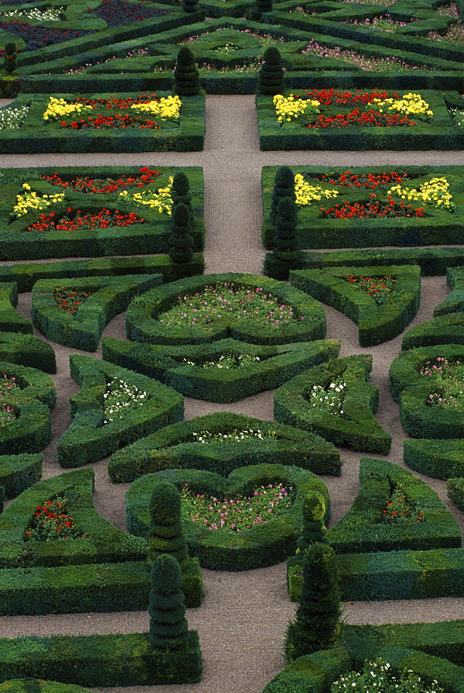 Dwarf dahlias and topiary shapes in the Garden of Love, Chateau de Villandry, UNESCO World Heritage Site, Pays de la Loire, France, Europe