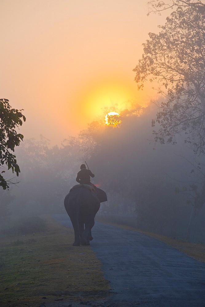 Elephant in the fog below the rising sun, Kaziranga National Park, UNESCO World Heritage Site, Assam, India, Asia