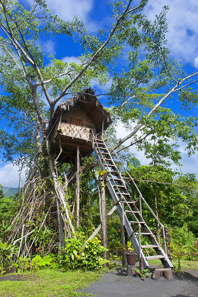 Tree house in a Banyan tree below the Volcano Yasur, Island of Tanna, Vanuatu, South Pacific.
