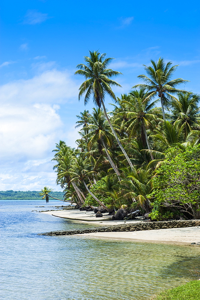 Beautiful white sand beach and palm trees on the island of Yap, Federated States of Micronesia, Caroline Islands, Pacific