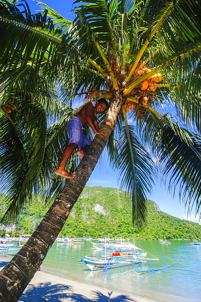 Man climbing on a coconut tree, El Nido, Bacuit Archipelago, Palawan, Philippines, Southeast Asia, Asia