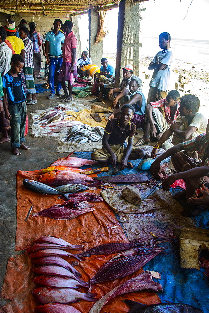 Men selling fish at the Fish Market of Hadibo, capital of the island of Socotra, Yemen, Middle East