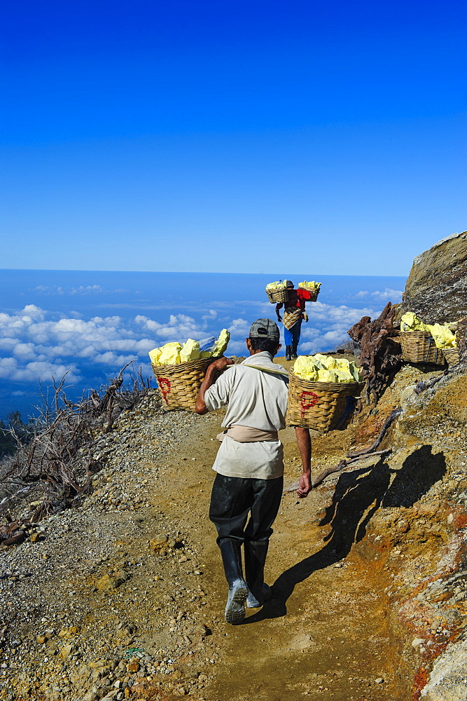 Workers carrying big pieces of sulphur out of the Ijen Volcano, Java, Indonesia, Southeast Asia, Asia