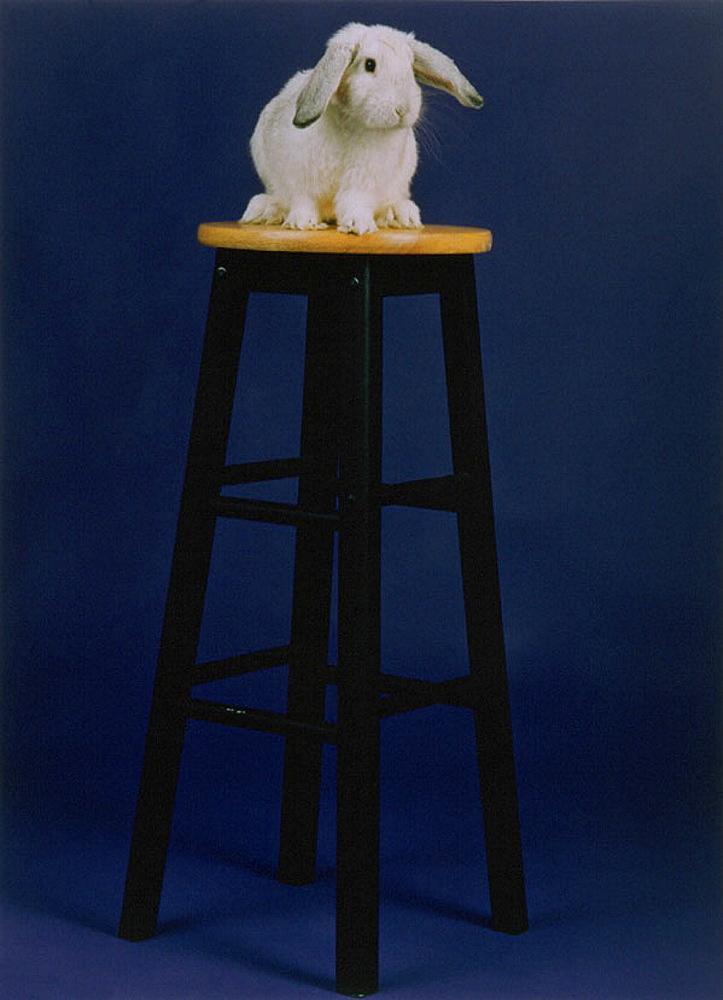 Rabbit on stool