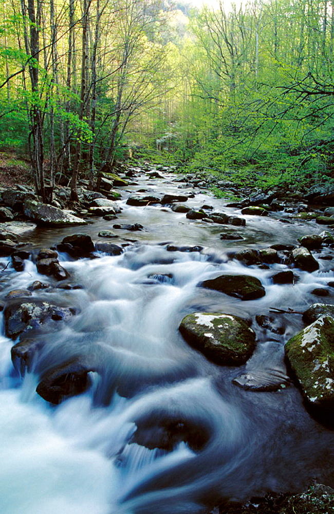 Little River, Tremont, Great Smoky Mountains National Park, Tennessee, USA
