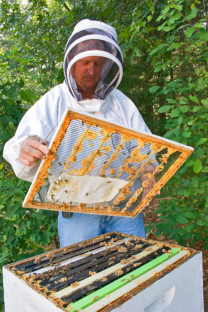 Queen excluder used between supers ( single boxes ) to isolate queen bee in lower portion of hive from honey bearing supers which are to be harvested, Paper towel which has been soaked in mineral oil, is used to help the bees combat mites.