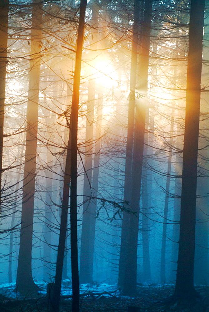 Evening sun breaking through mist, Bavarian forest, Germany