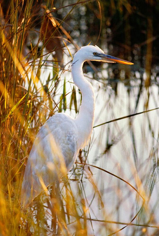 Everglades Natural Park, Florida USA