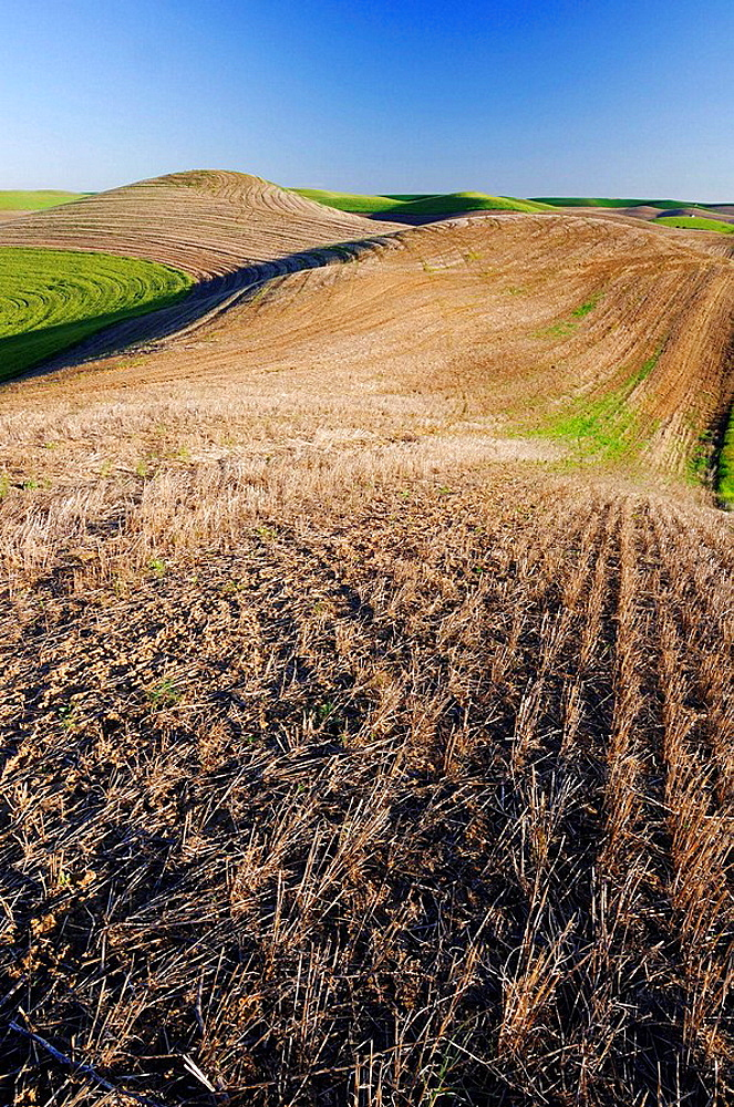 Planted and fallow fields in the Palouse Hills near Colfax The verdant Palouse stretches across more than 2 million acres in eastern Washington and western Idaho Near Colfax, Palouse, Whitman County, Washington State, USA, America