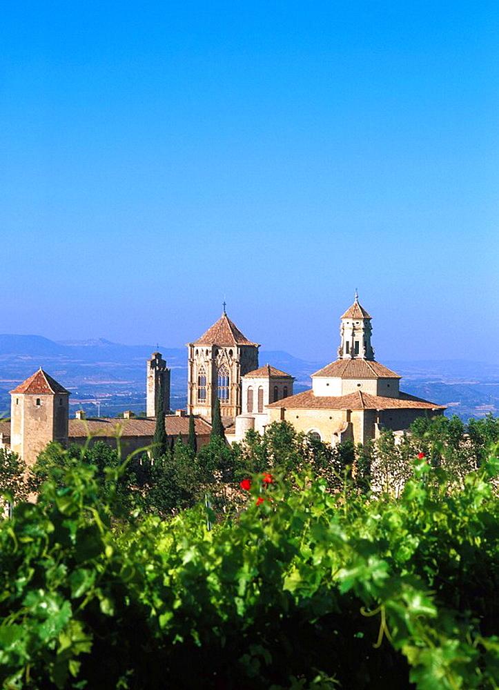 Vineyards, Poblet monastery, Tarragona province, Spain