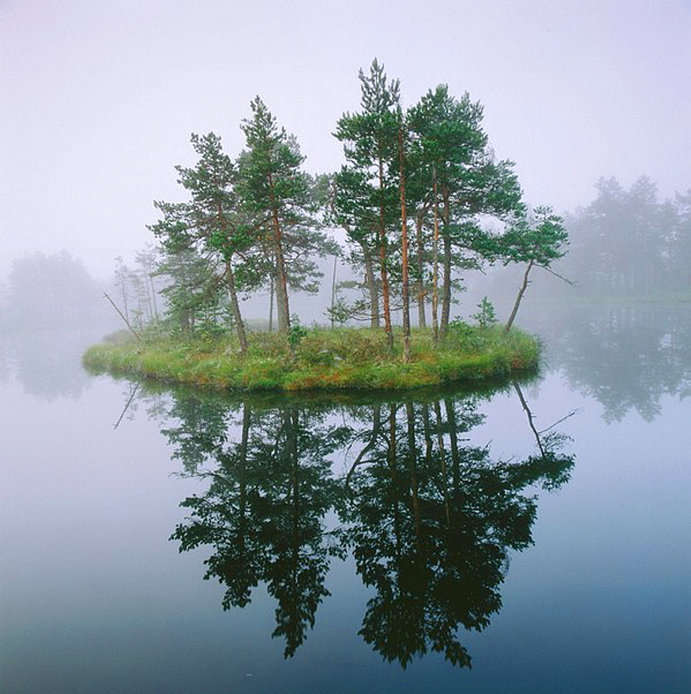 Morning mist on small lake with pine forrest on island in marshlands, Vastmanland, Sweden.