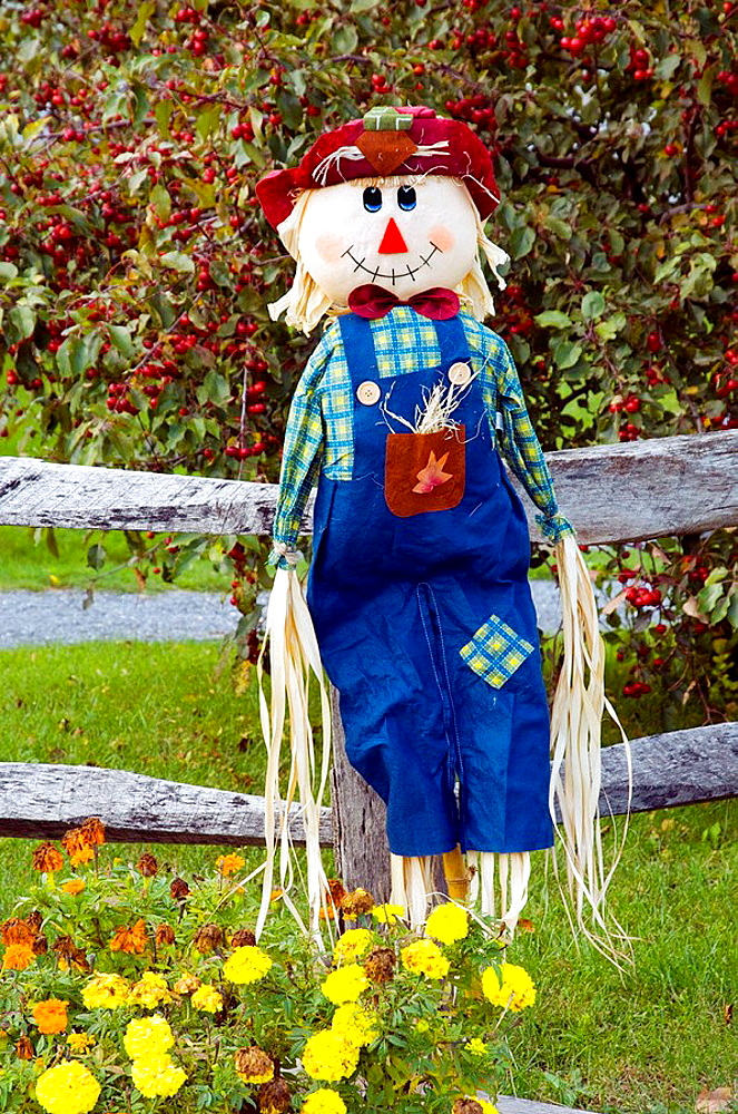 A fall seasonal yard scarecrow at the Dakin Farm in South Burlington, Vermont, USA