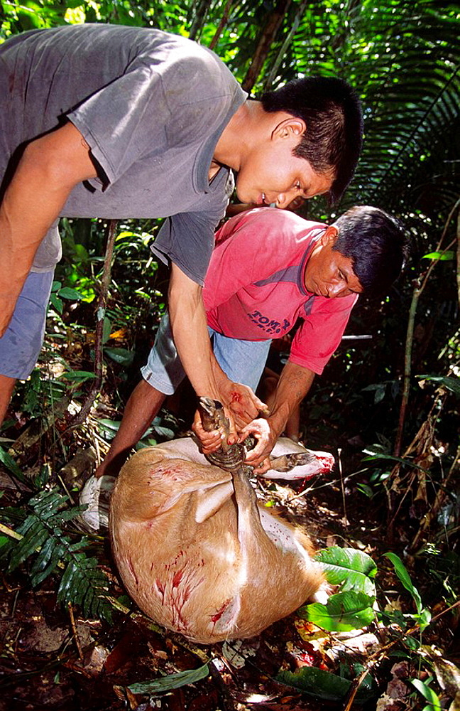 Hunters with killed deer, Chobayacu river, Loreto, Peru