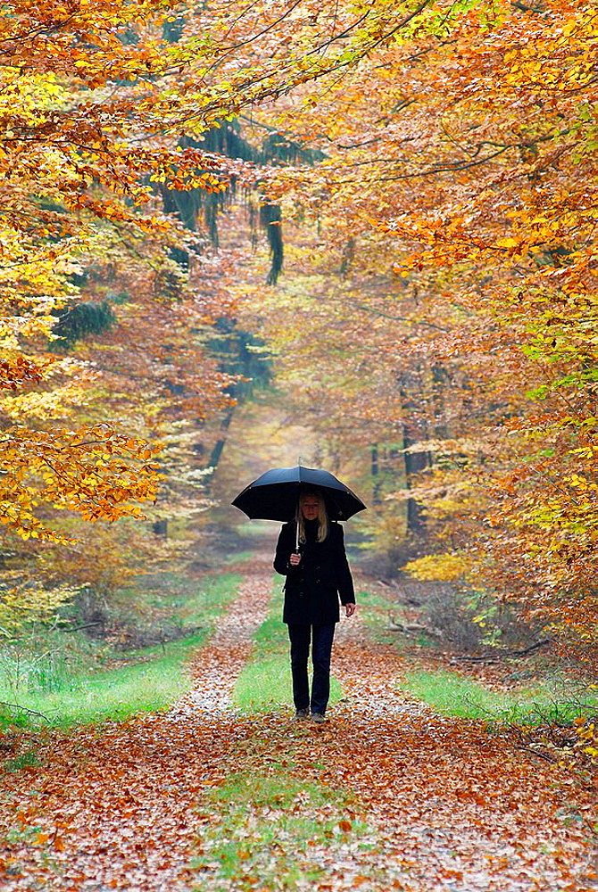 Woman with umbrella on path in forest, beech trees, autumn, Germany - 817-137580