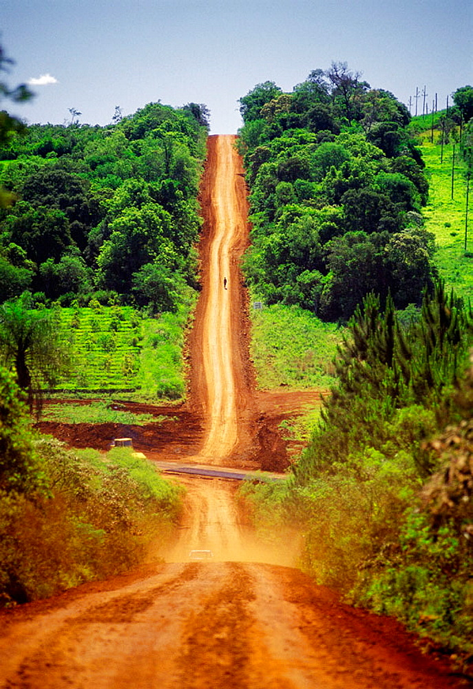 Country Road, Misiones province, Argentina - 817-13949