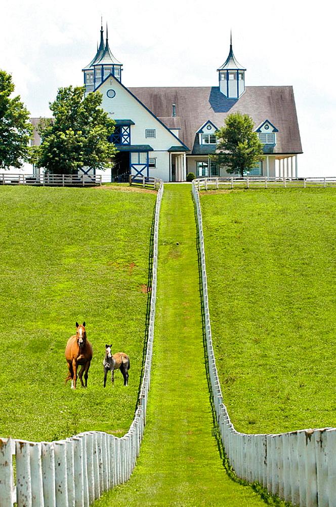 Kentucky Horse park and surrounding horse farms in Lexington KY