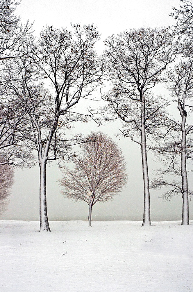 Winter scene with wet snow stick to trees at Port Huron Michigan