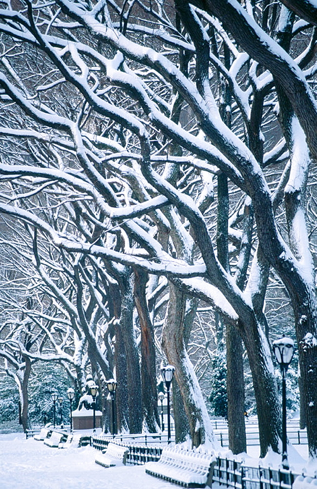 Snow in Central Park, New York City, USA