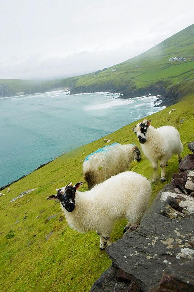 View from Slea Head viewpoint, Dingle peninsula, Co, Kerry, Ireland