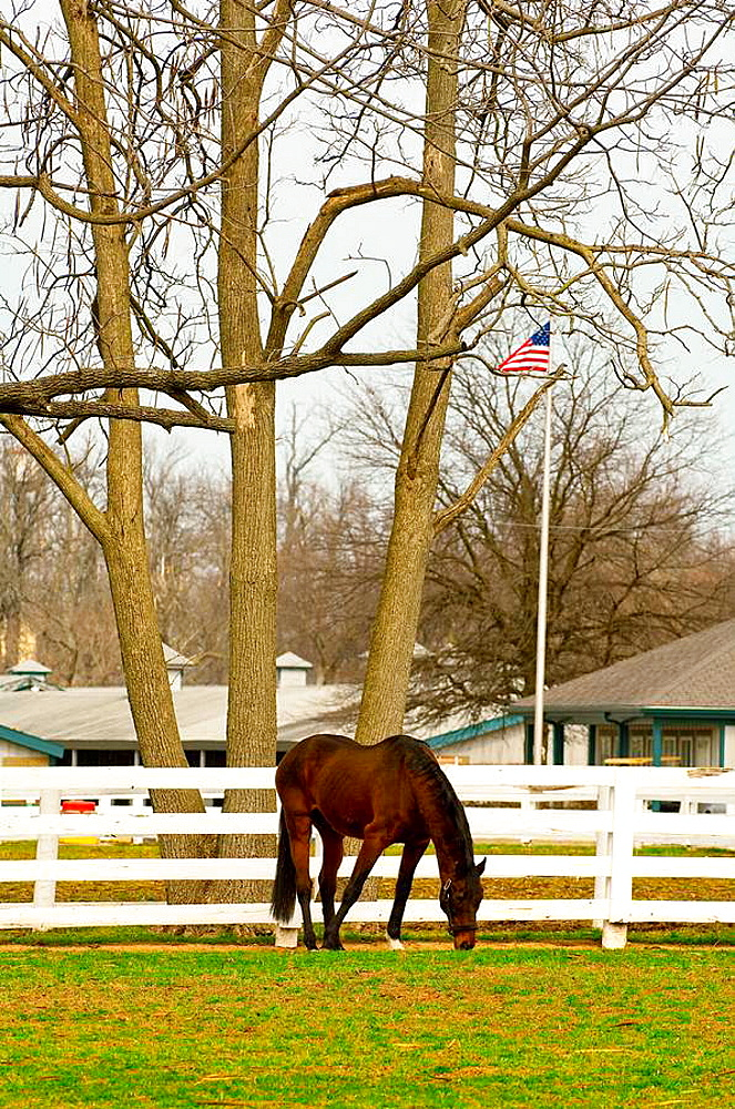 1987 Kentucky Derby winner Alysheba (Alysheba was euthanized four days after this photo was taken), Kentucky Horse Park, Lexington, Kentucky USA