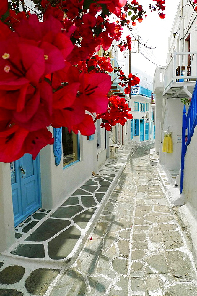 Flowers in a Mykonos street, Greek island, Cyclades, Greek, Europe