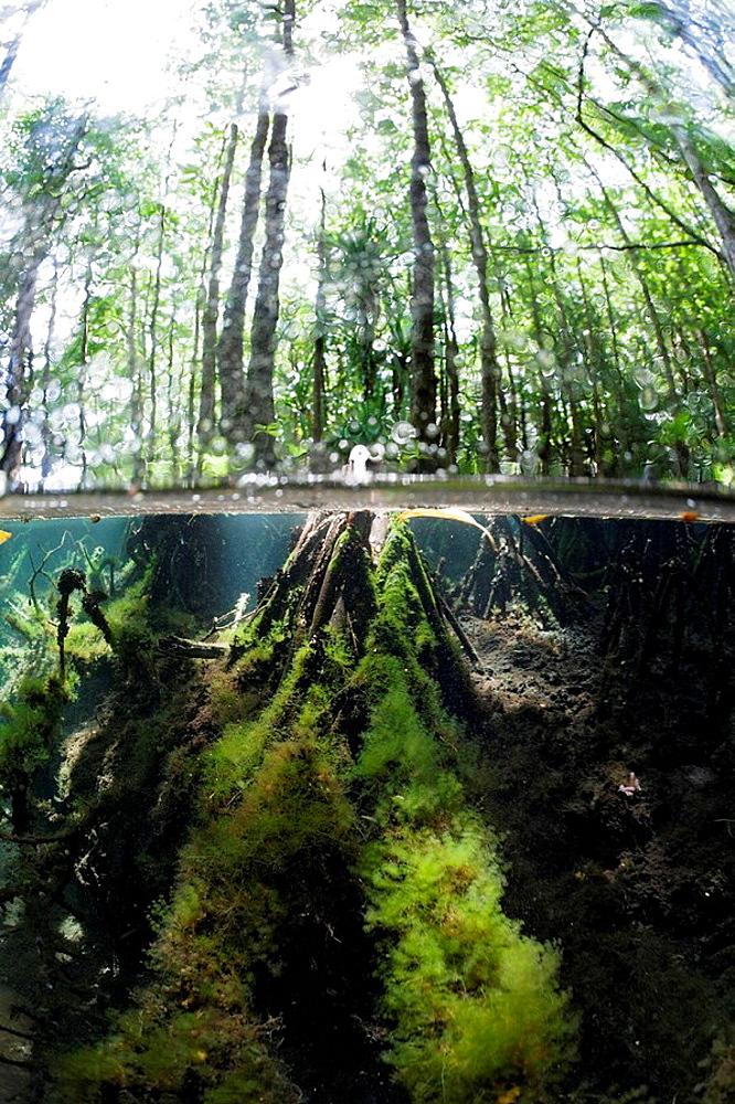 Splitimage of Mangrove, Jellyfish Lake, Micronesia, Palau