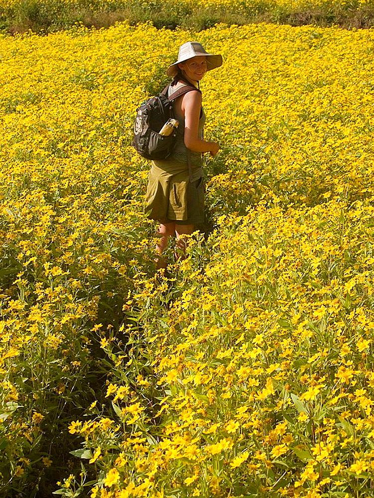 Woman amidst sesame flowers in Burma