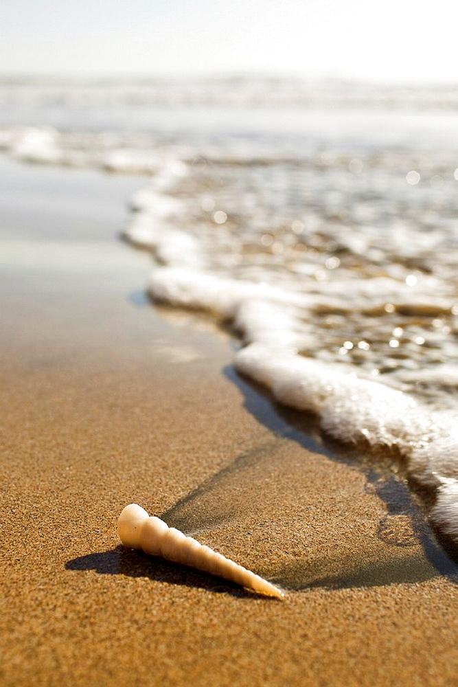 Sea foam and seashell washed onto the shore of Parque Nacional Marino las Baulas in Playa Grande, Costa Rica