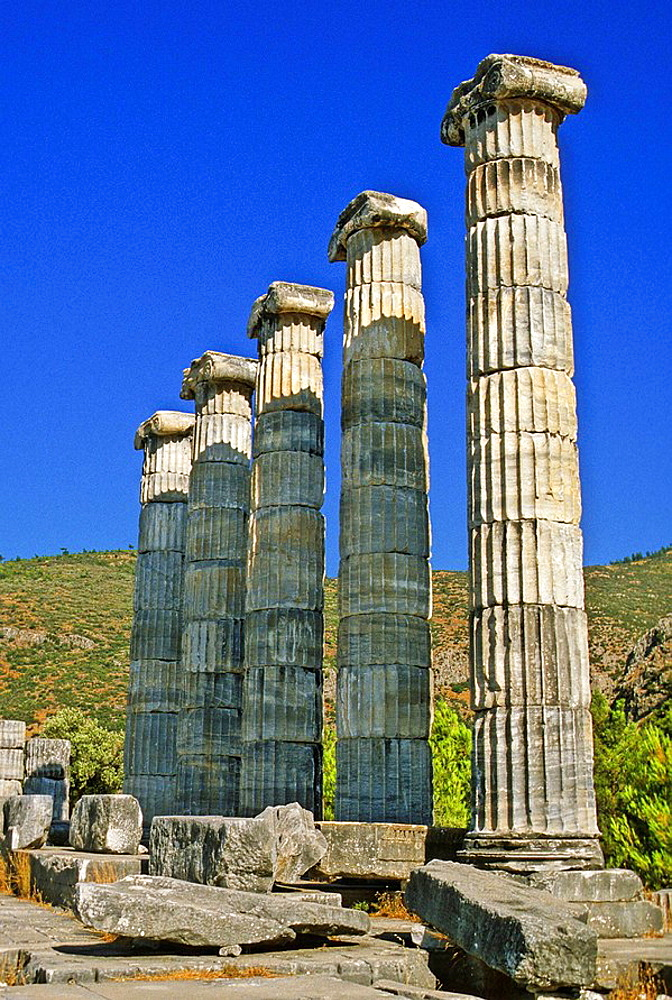 Turkey, the ancient Hellenistic city of Priene (near Kusadasi), colossal columns of the temple with ionic capitals