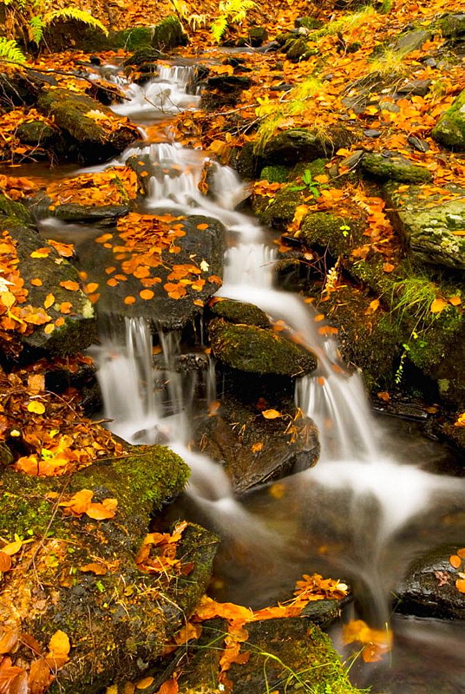 Tejera Negra Natural Park, Cantalojas, Sierra de Ayllon, Guadalajara province, Castilla-La Mancha, Spain