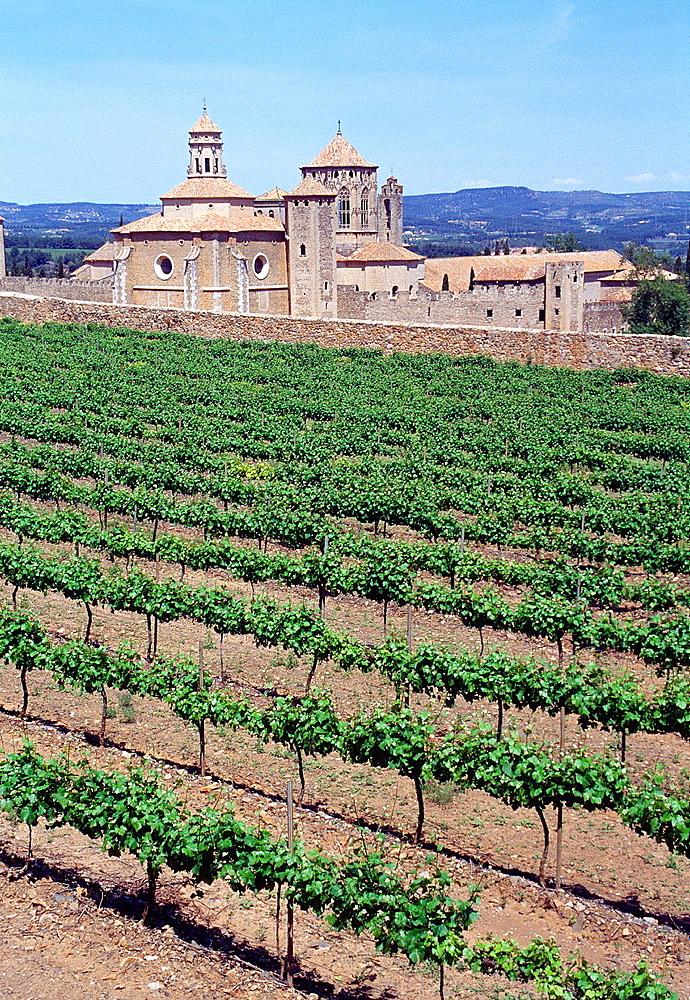 Vineyards and Poblet monastery, Tarragona province, Catalonia, Spain.
