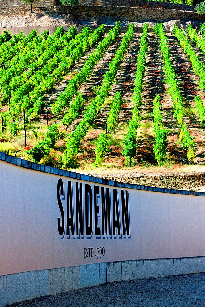 vineyars in Douro Valley, Sandeman Winery, Portugal