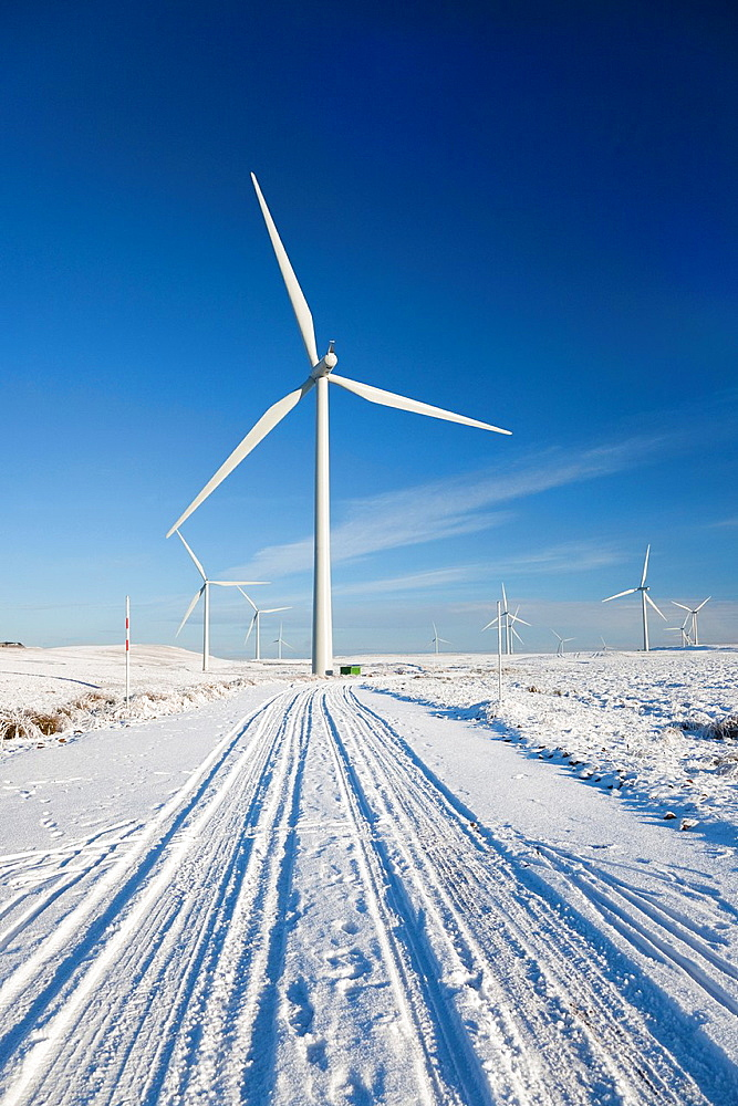 Whitelee Wind Turbine farm, alternative energy generation by turbines, Eaglesham Moor, Glasgow, Scotland, UK Whitelee Windfarm is the largest in Europe Each turbine is 65 metres high and has a rotor diameter of 90 metres