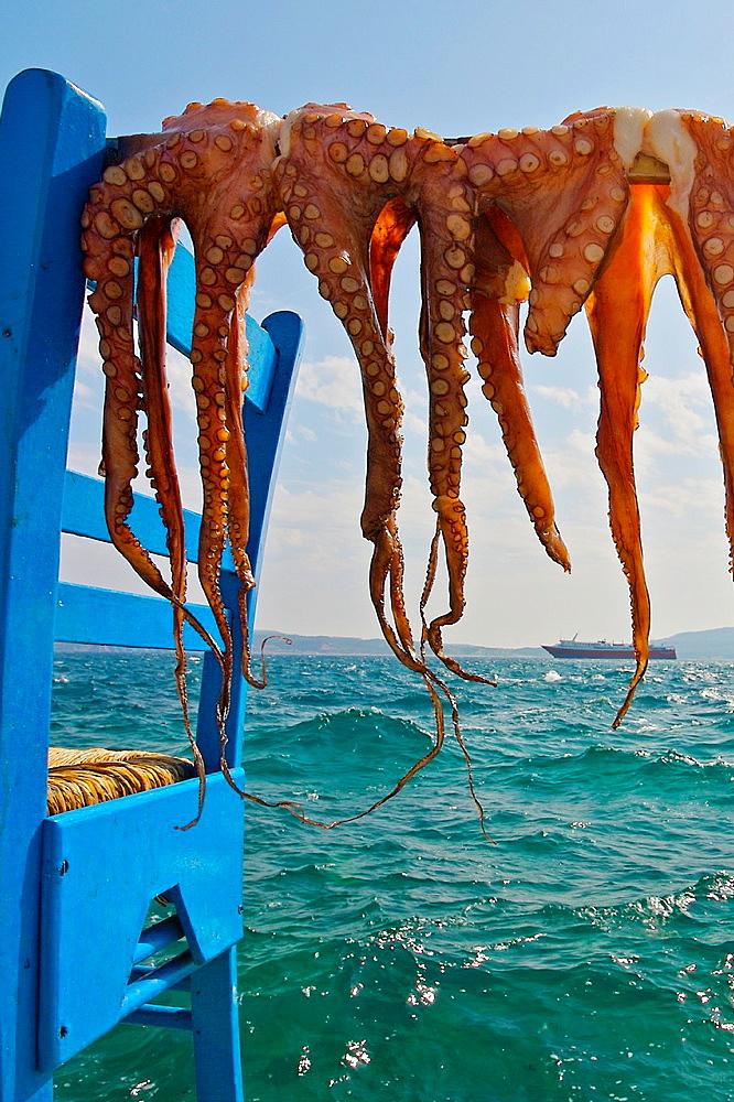 Drying octopuses, Adamas village, Milos, Cyclades Islands Greece - 817-271831