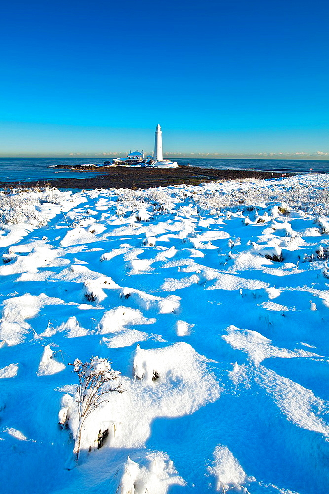 England, Tyne and Wear, St Marys Island and Lighthouse Snow covered Tussock grass on the North Tyneside coast near the city of Newcastle Upon Tyne