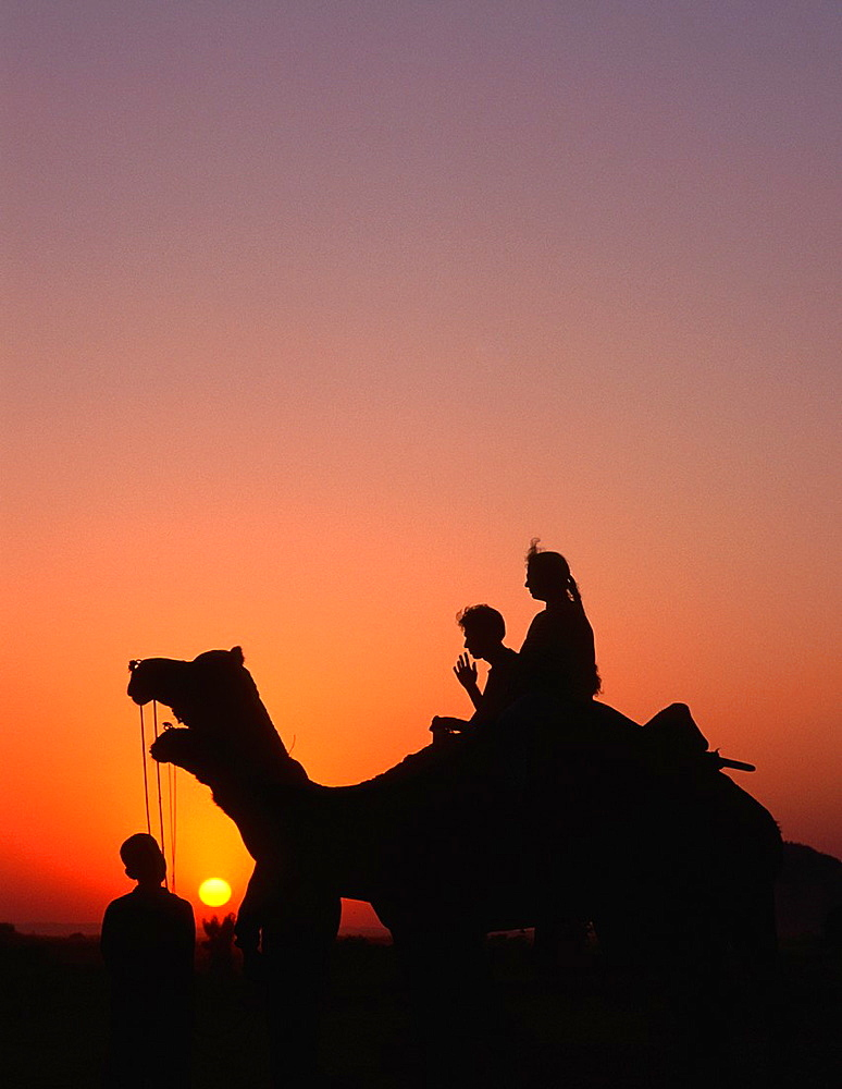India, Rajasthan, Pushkar, Camel Fair, camels, people, - 817-318792