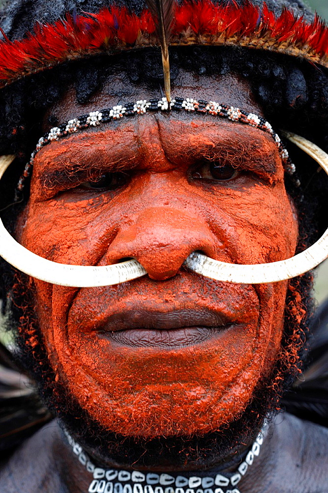 Portrait of local Papuan man, looking at the camera, with traditional face painting and wild boar teeth put through his nose, Baliem Valley festival, Jayawijaya region, Papua, Indonesia, Southeast Asian