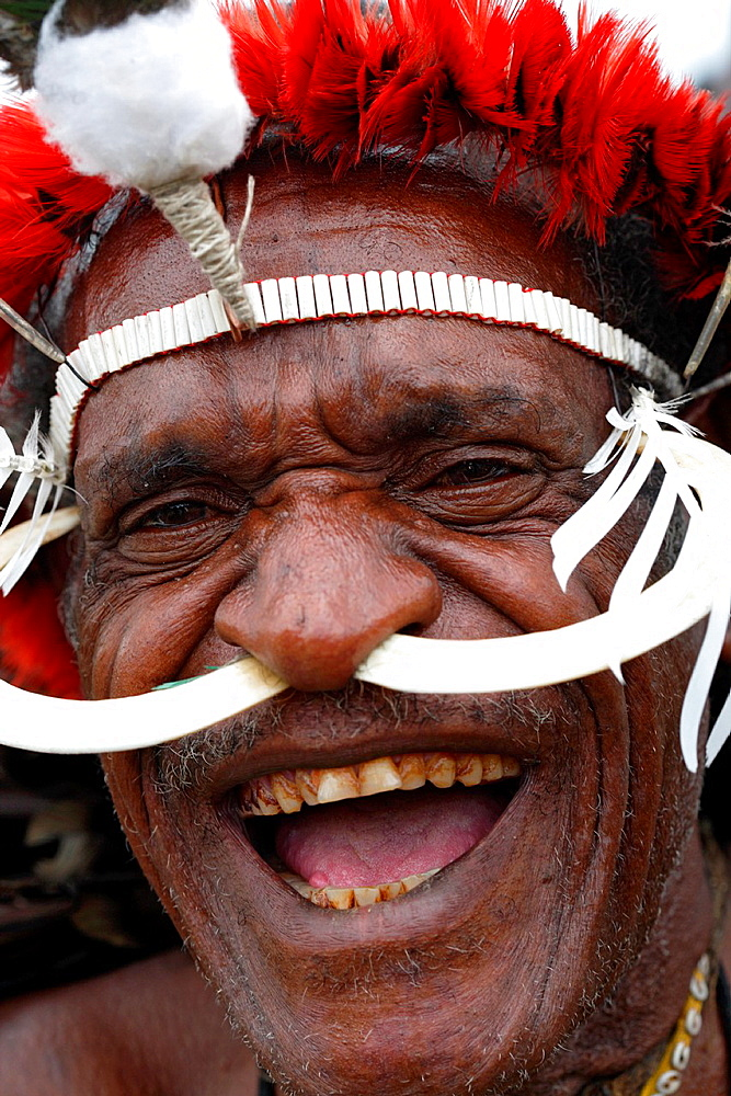 Portrait of local Papuan man laughing and looking at the camera, with wild boar teeth put through his nose, Baliem Valley festival, Jayawijaya region, Papua, Indonesia, Southeast Asian