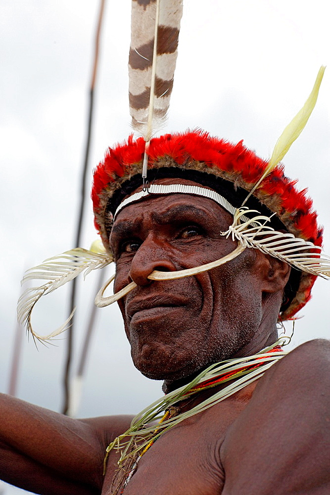 Portrait of old local Papuan man with wild boar teeth put through his nose, Baliem Valley festival, Jayawijaya region, Papua, Indonesia, Southeast Asian