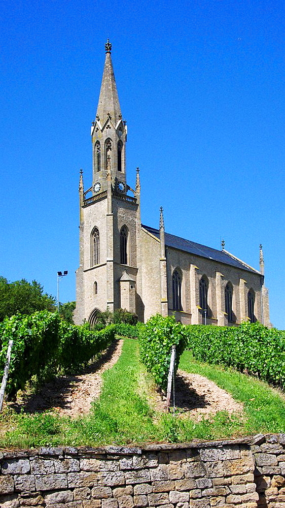 Germany, Waldboeckelheim, Verbandsgemeinde Ruedesheim, Nahe, Nahe Valley, nature reserve Soonwald-Nahe, Hunsrueck, Rhineland-Palatinate, evangelic church in a vineyard, grapes