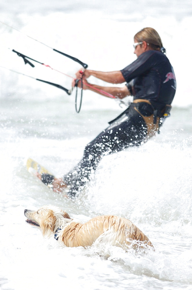 Kiteboarder and dog