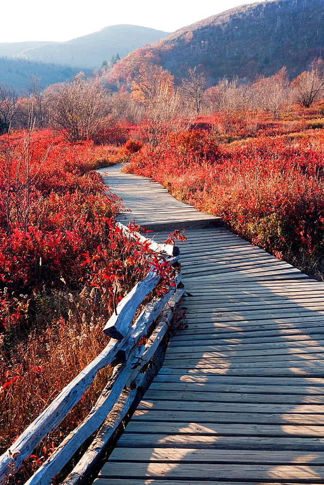 Boardwalk through Graveyard Fields, Blue Ridge Parkway, near Asheville, North Carolina USA