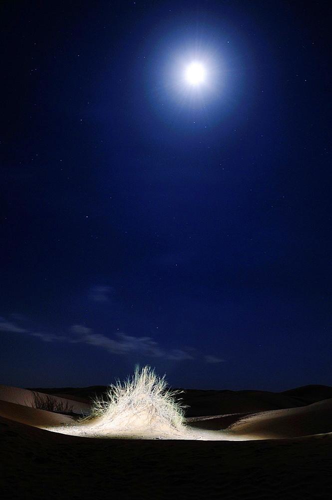 Africa, Tunisia, nr Ksar Rhilane Artistic illumination at full moon of a bush in the Sahara desert By Harald Woeste