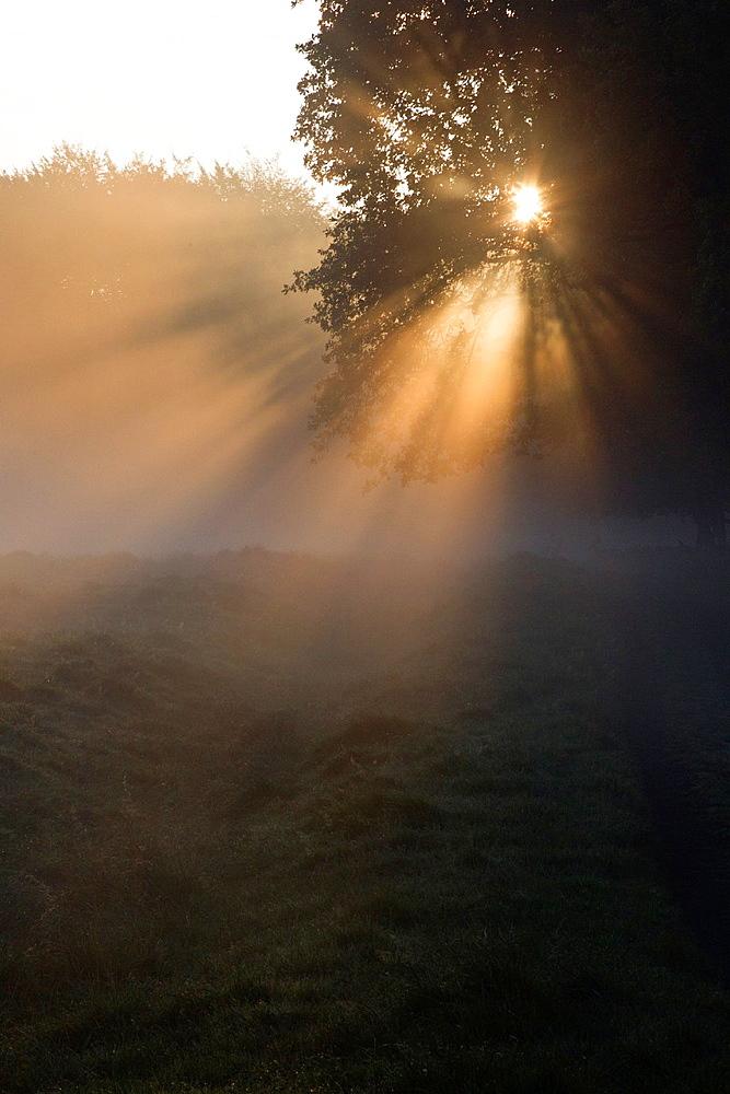 Autumn Morning Sunshine and Mist , Shining through Trees on Woodland Edge, Sjaelland, Denmark