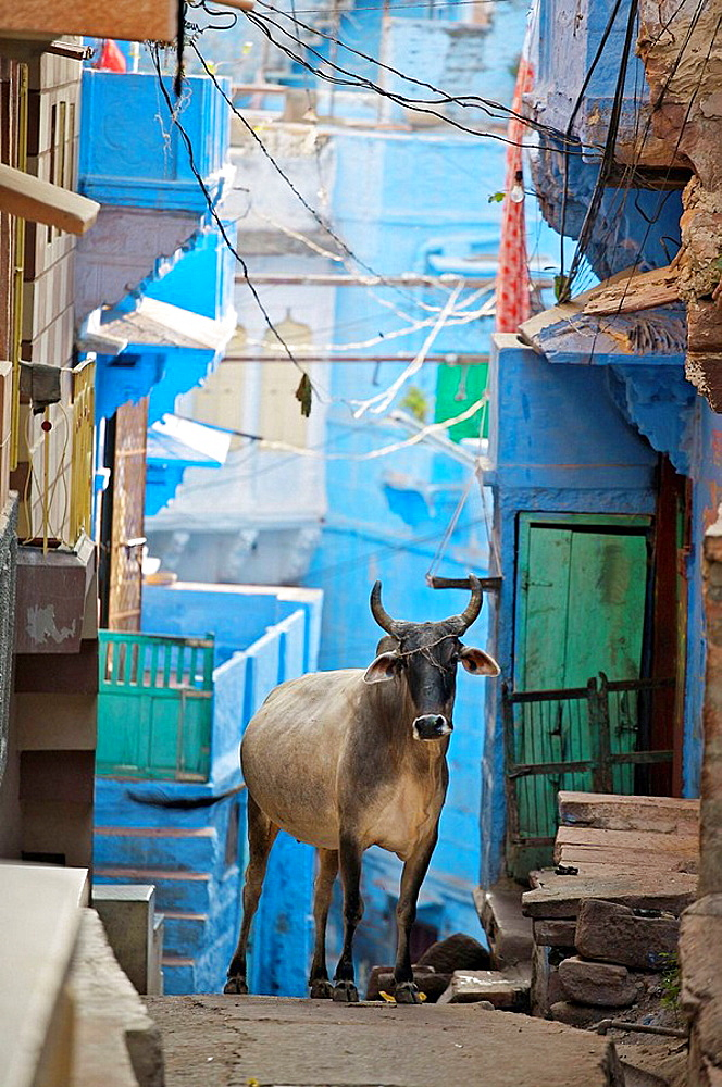 The blue village Jodhpur, Rajasthan, India - 817-37047