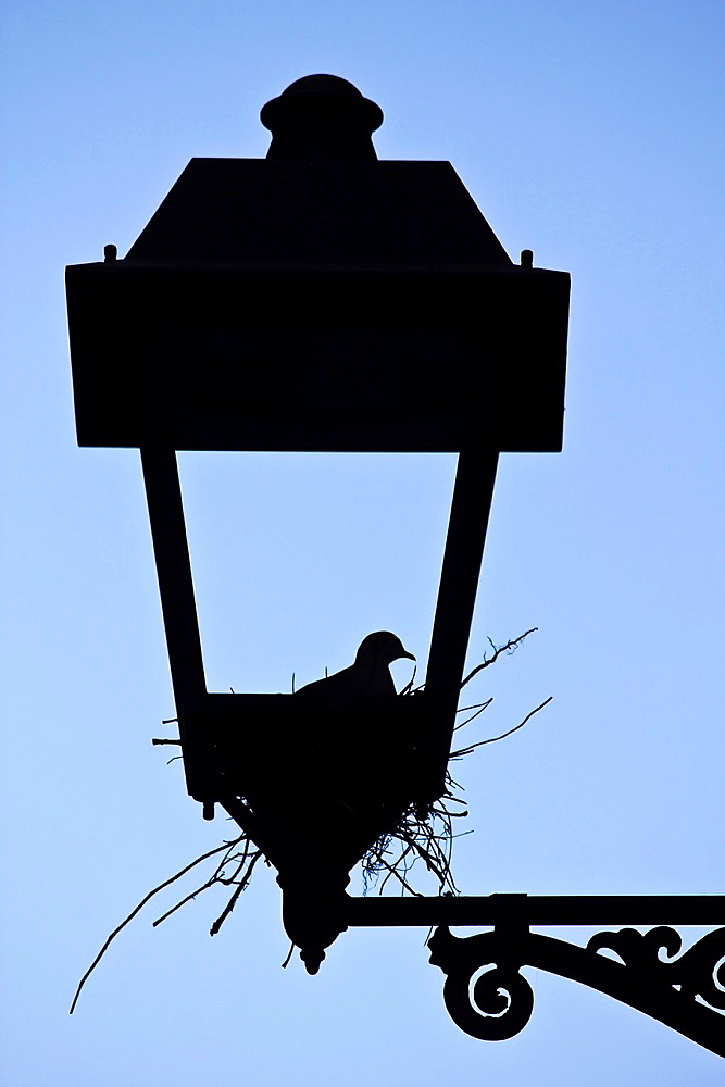 Pigeon nest on a lamppost - Tarragona - Catalonia - Spain - Europe