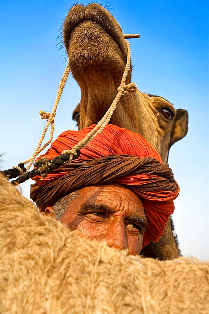 Pushkar camel fair, Pushkar, Rajasthan, India, Asia - 817-37472