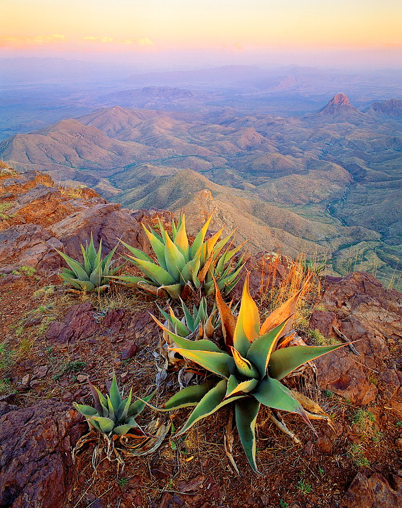 Agaves on the South Rim of the Chisos Mountains, with the Sierra Quemada below, and the Rio Grande and Mexico in the distance Big Bend National Park, Texas - 817-383903